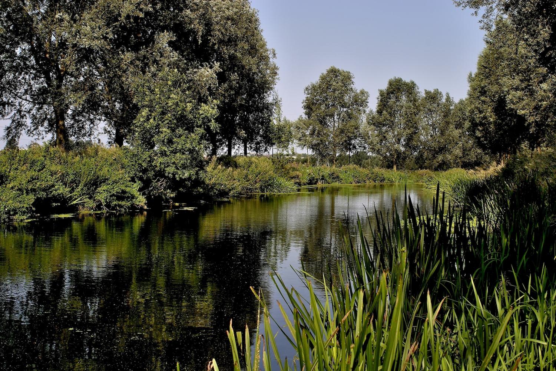 Chelmer Canal near Chelmsford Essex England UK