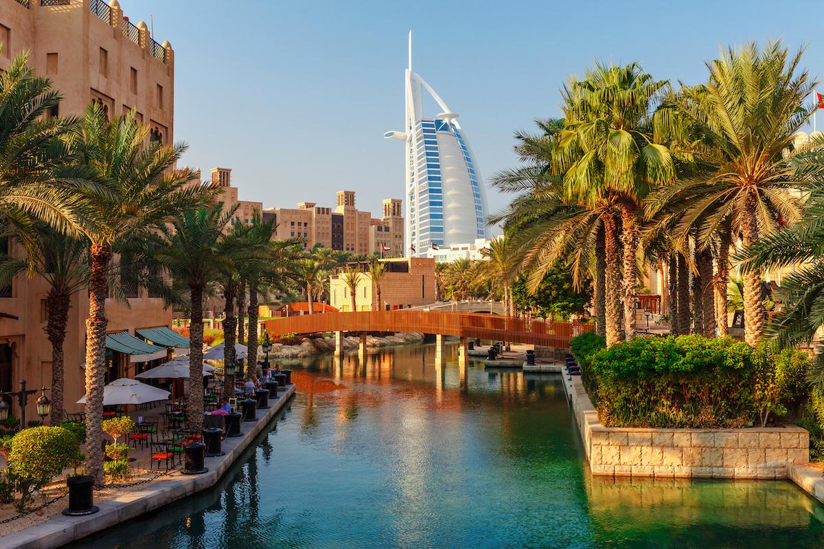Palm trees in Dubai, UAE